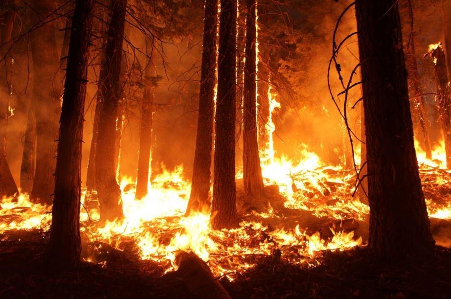 Canadá ofrece hasta 15 millones de dólares para combatir los incendios forestales en el Amazonas