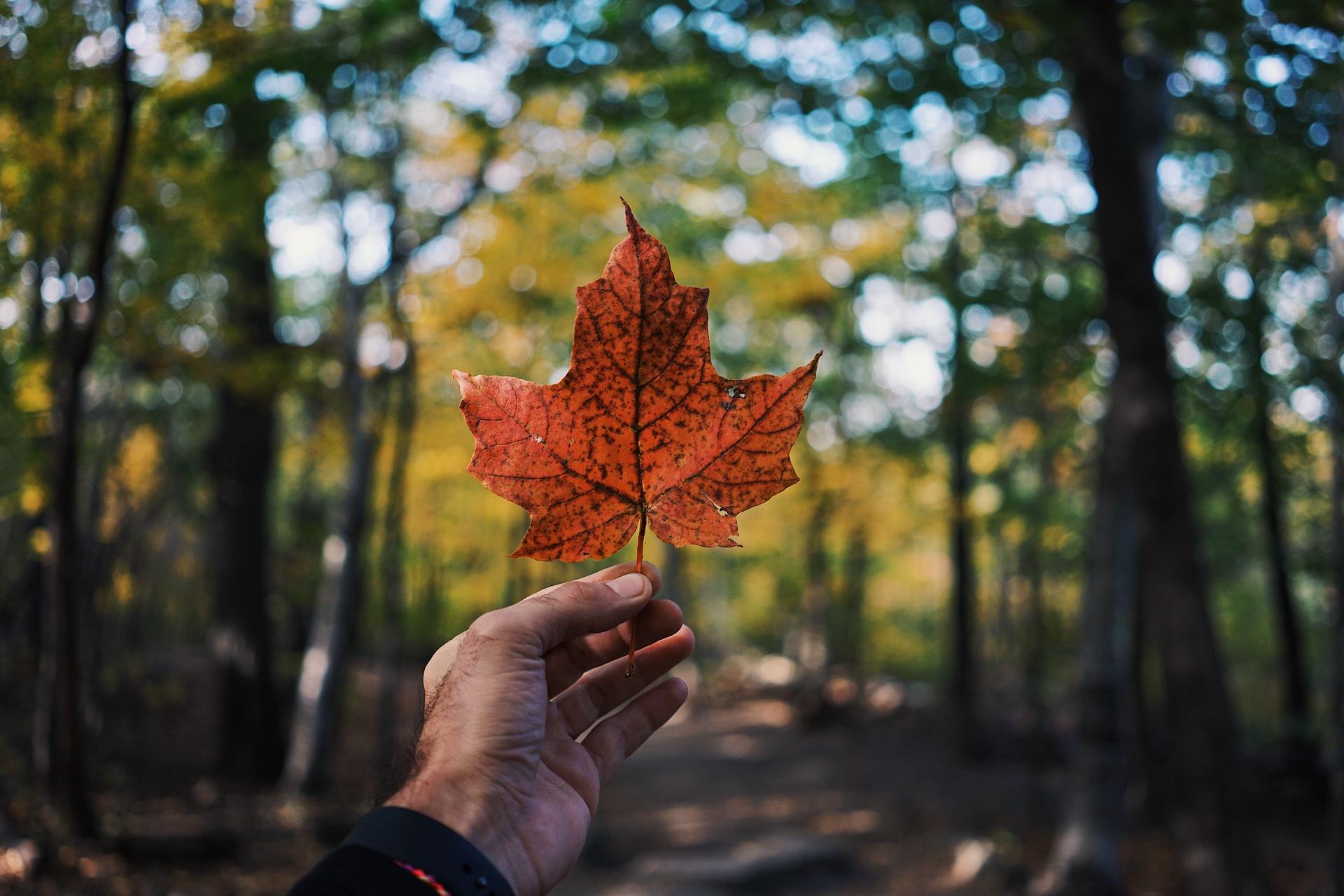 Octubre será un mes muy importante para el futuro del sistema de inmigración canadiense